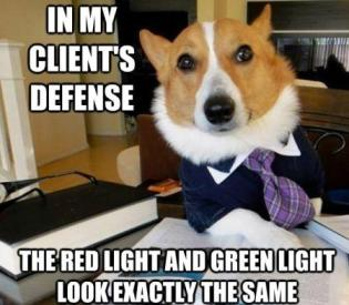 lawyer-dog-red-and-green